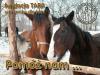 tara, fundacja, viva, help, konie, kotek